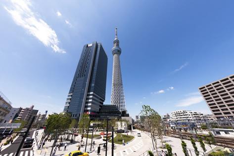 東京薄毛対策AGA治療